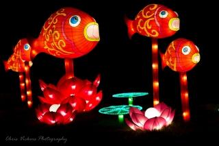 Asia Lanterns NBG-18